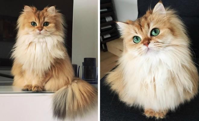 chyba kočička